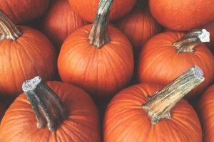 Win 4 Season Tickets to Pumpkinville - Batch of Orange Pumpkins On A Fall Day